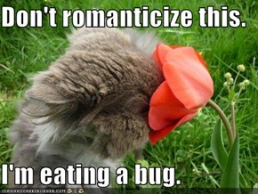 Don't romanticize this.  I'm eating a bug.