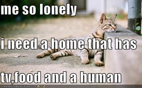 me so lonely i need a home that has tv,food and a human
