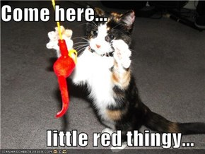 Come here...  little red thingy...