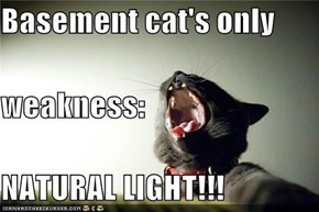 Basement cat's only weakness: NATURAL LIGHT!!!