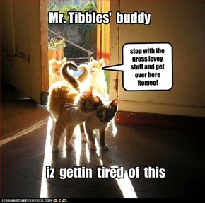 Mr. Tibbles'  buddy