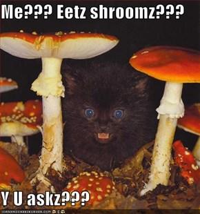 Me??? Eetz shroomz???  Y U askz???