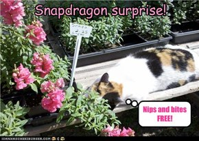 Snapdragon surprise!