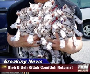Breaking News - Itteh Bitteh Kitteh Comitteh Returns!
