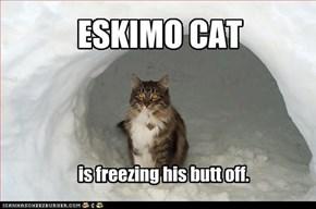 ESKIMO CAT