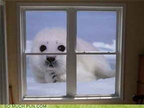 Always Make Sure to Seal Your Windows
