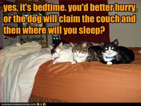 yes, it's bedtime. you'd better hurry,  or the dog will claim the couch and then where will you sleep?