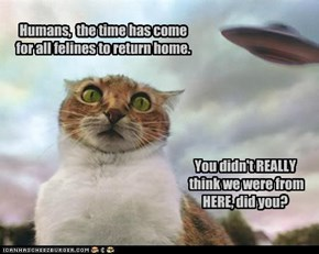 Humans,  the time has come for all felines to return home.