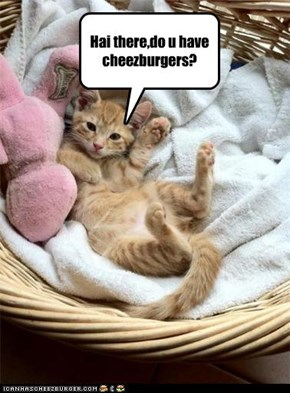 got cheezburgers?