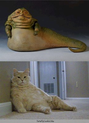 This Cat Totally Looks Like Jabba the Hutt