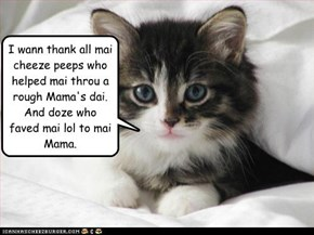 I wann thank all mai cheeze peeps who helped mai throu a rough Mama's dai. And doze who faved mai lol to mai Mama.