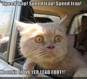 """Speed trap! Speed trap! Speed trap!  Hoomin MOVE YER LEAD FOOT!!"""