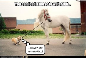You can lead a horse to water but...