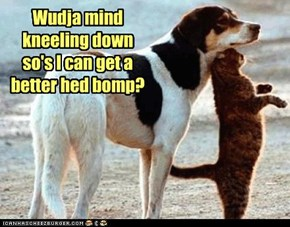Wudja mind kneeling down so's I can get a better hed bomp?