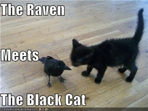 The Raven Meets The Black Cat