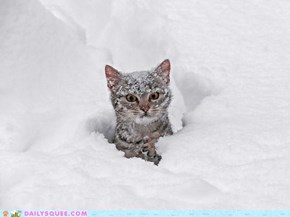 Kitty Playing in the Snow
