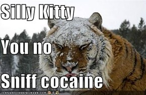 Silly Kitty You no Sniff cocaine