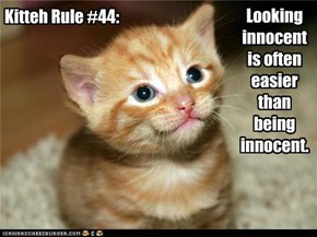 Kitteh Rule #44: