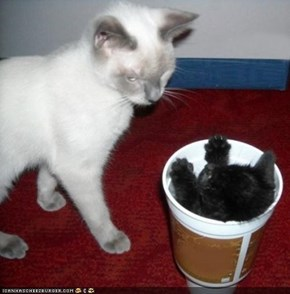 Cyoot Kittehs of teh Day: Um, Ai Ordered a SPRITE!