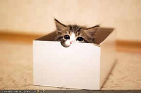 Cyoot Kitteh of teh Day: Iz Gud at Hide 'n Seek, Rite?