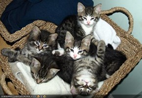 Cyoot Kittehs of teh Day: Basket of Fluff