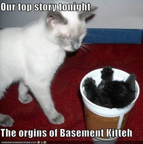 Our top story tonight  The orgins of Basement Kitteh