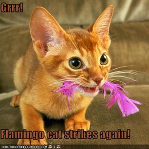Grrr!  Flamingo cat strikes again!
