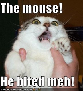 The mouse!  He bited meh!