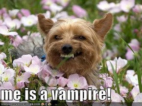 me is a vampire!