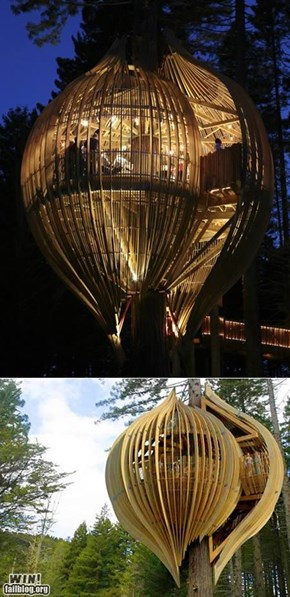 Treehouse Design WIN