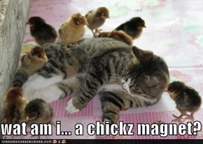 wat am i... a chickz magnet?