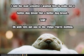 I  told  the  mad  scientist  I  wanted  him  to  make  me  a   better  dog  breed.  Not  a  butter  dog  breed...  *sigh*   Oh  well,  lets  put  you  in  the  fridge.  You're  melting.