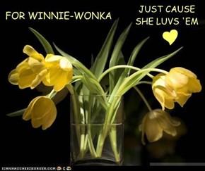 FOR WINNIE-WONKA