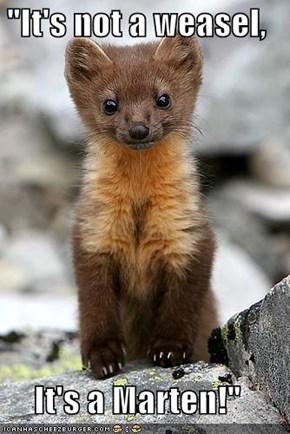 """""""It's not a weasel,  It's a Marten!"""""""