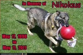 In Memory of Nikolaus