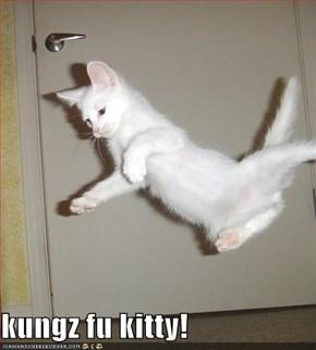 kungz fu kitty!