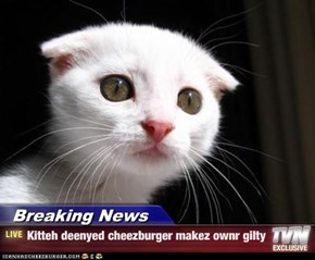 Breaking News - Kitteh deenyed cheezburger makez ownr gilty