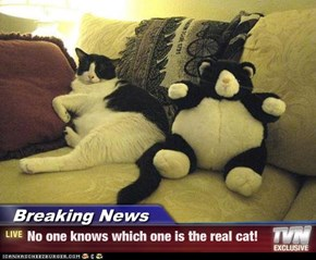 Breaking News - No one knows which one is the real cat!