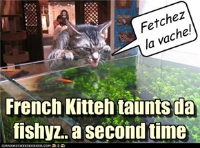 French Kitteh taunts da fishyz.. a second time