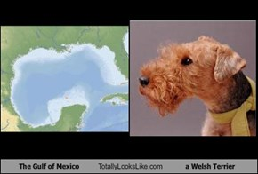 The Gulf of Mexico Totally Looks Like a Welsh Terrier