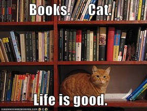 Books.      Cat.  Life is good.