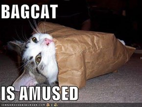 BAGCAT  IS AMUSED