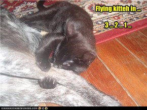 Busy Kitteh learns how to eat n fly ...