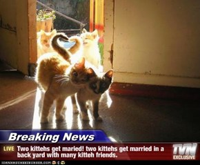 Breaking News - Two kittehs get maried! two kittehs get married in a back yard with many kitteh friends.
