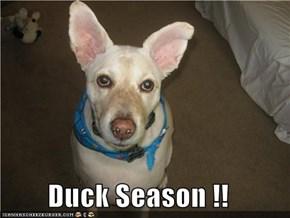 Duck Season !!