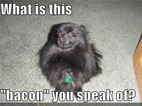 "What is this  ""bacon"" you speak of?"