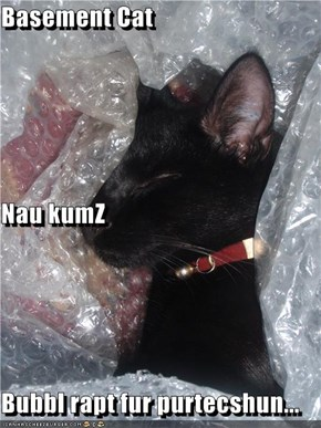 Basement Cat Nau kumZ Bubbl rapt fur purtecshun...