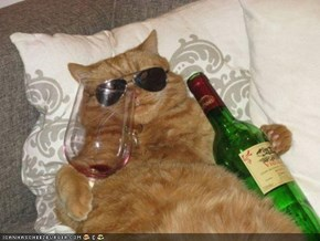 Cyoot Kitteh of teh Day: Iz Nawt Juss Drunk, Iz Alsew FABYOOLUS!