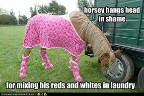horsey hangs head in shame