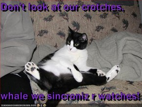 Don't look at our crotches,  whale we sincroniz r watches!